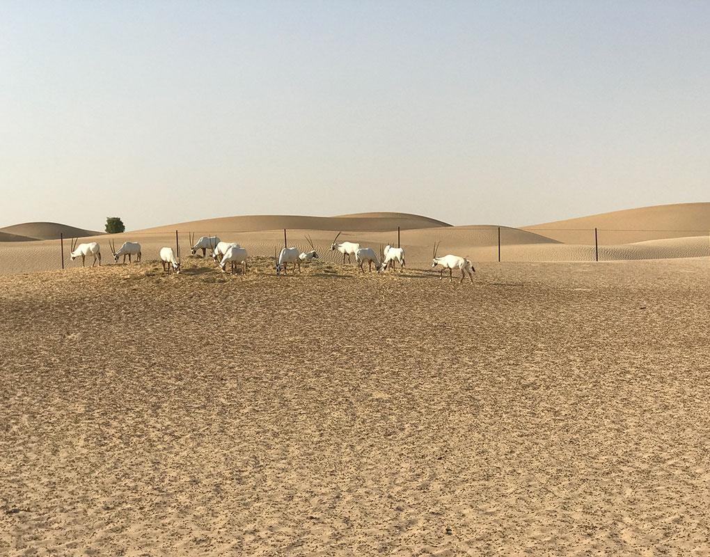 Al Qudra Oasis