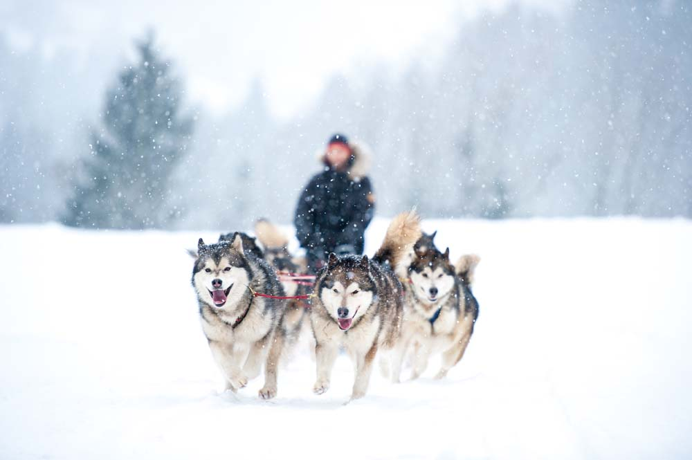 Dogsled through Siberia Russia
