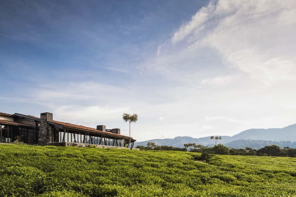 Lose yourself in tea Rwanda