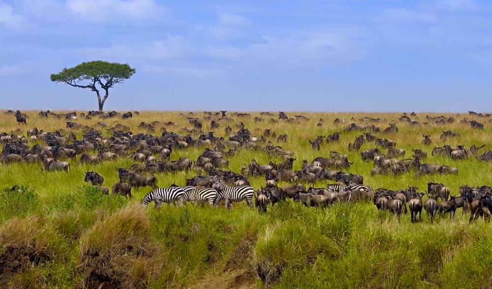 Witness the Great Migration Tanzania