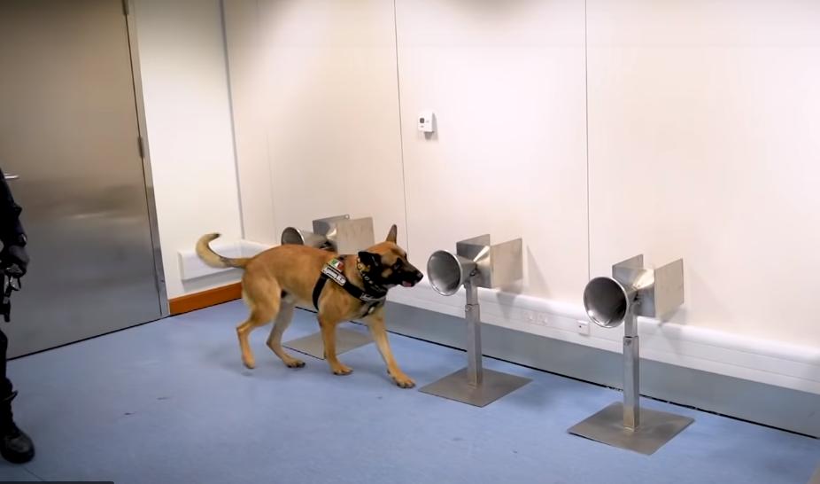 dubai k9 sniffer dogs covid-19