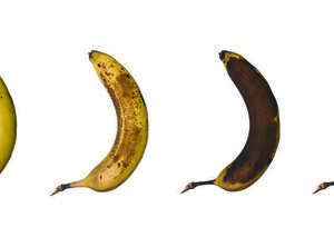 Are bananas facing extinction?