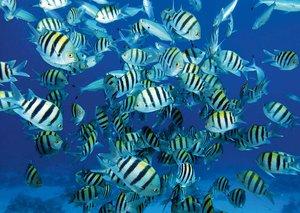 Scuba diving in Borneo