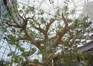 Dubai now has an indoor rainforest