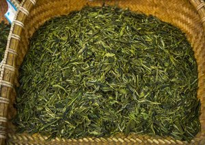The amazing health benefits of green tea