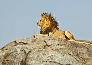 Surviving the Serengeti | Esquire Explores