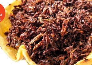 Are insects the solution to our food shortage problems?