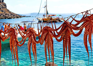 Japan's psychic octopus eaten + top stories this week