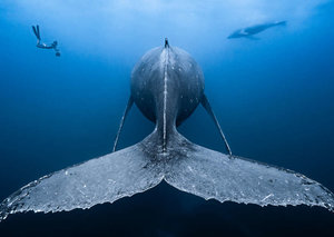 These are the winners of the Ocean Art photography competition