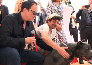 Tarantino's dog wins Cannes 'Palm Dog' award