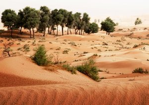 National Geographic will air Sharjah nature documentary