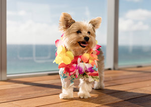 This Dubai hotel is offering 5-star pet accomodation