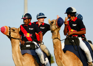 F1 drivers Max Verstappen and Alex Albon play camel polo in Abu Dhabi