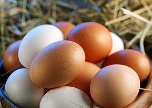 UAE bans chicken and eggs from these countries
