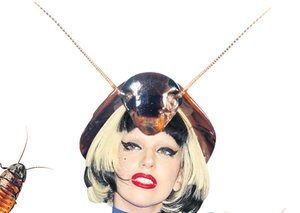 Lady Gaga just had a bug named after her: