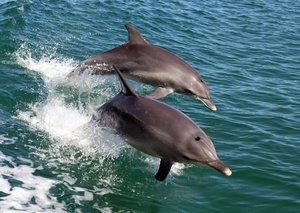 Covid-19 upside? Dolphins return to Italy and clear Venice canals as humans self-isolate