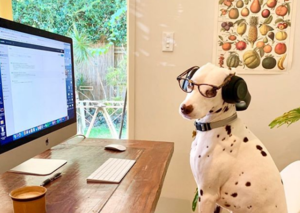 Dogs working from home during Covid-19 crisis is a definite upside of self-isolation