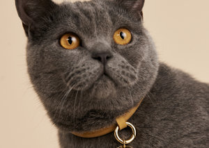 This company makes jewellery for dogs and cats