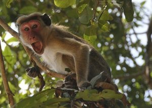 A monkey stole positive Covid-19 blood samples after attacking lab worker