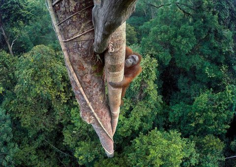 Amazing shots from the 'Wildlife Photographer of the Year' Awards 2016