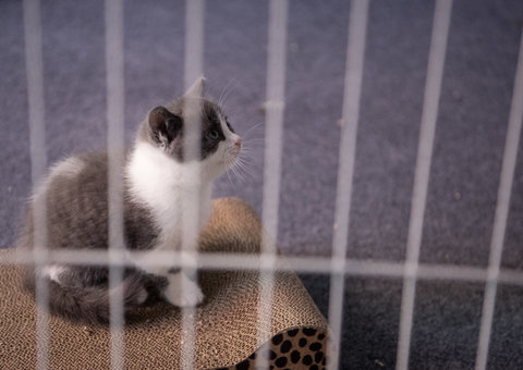 Meet Garlic, the world's first kitten clone