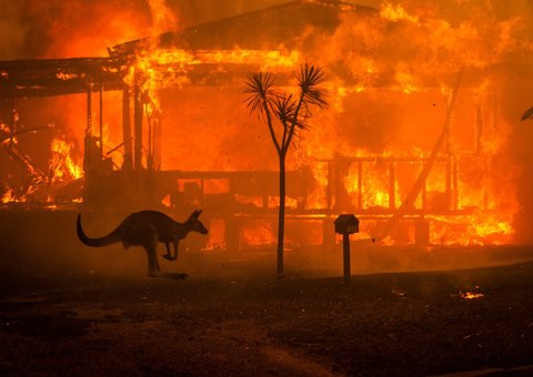 Almost half a billion animals have been killed by the bush fires in Australia
