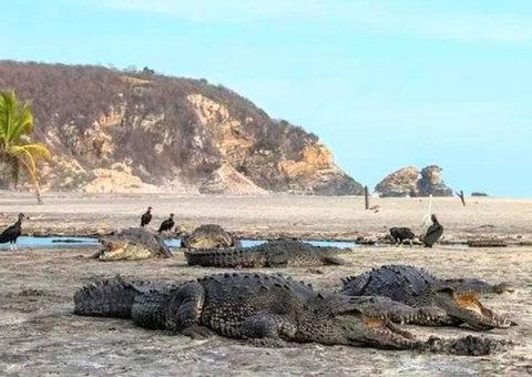 Crocodiles sunbathe on empty beaches in Mexico as humans self-isolate