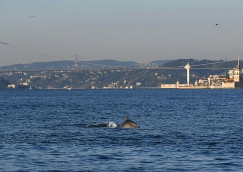 Dolphins spotted in the Bosphorus as Istanbul residents stay at home due to Covid-19 lockdown
