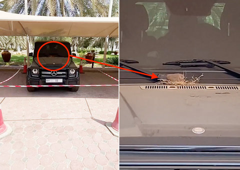 Bird builds a nest on Dubai Crown Prince Sheikh Hamdan's Mercedes G-wagon