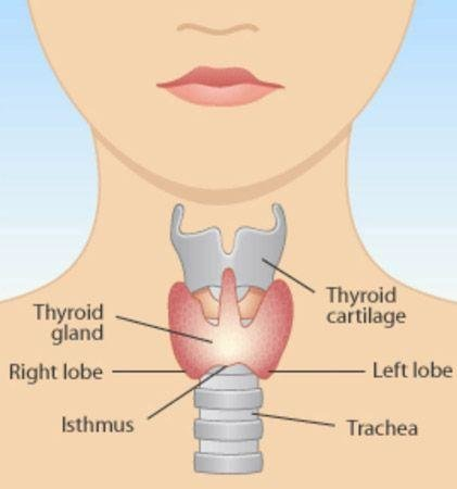 Dr Simpson, Health, Thyroid
