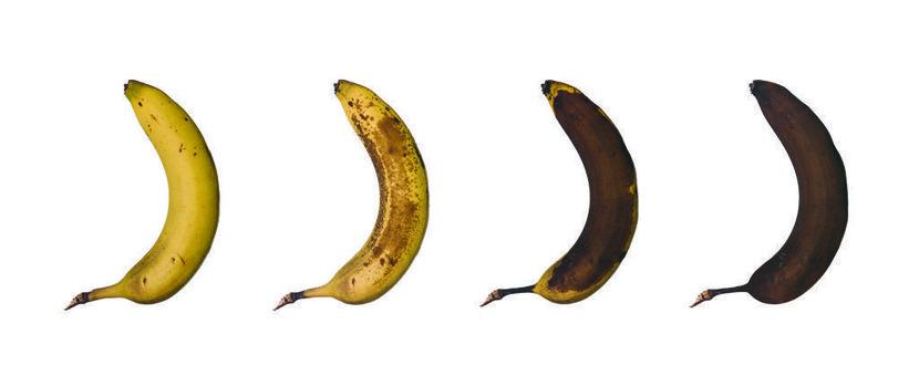 Bananas, Exit notes, Extinct, Food, Interesting