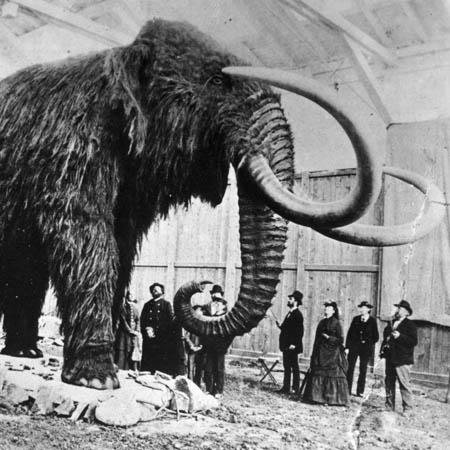 Exit notes, Mammoth, Science, Woolly mammoth