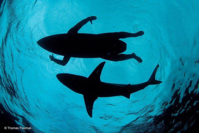 Photography, Wildlife, Wildlife Photographer of the Year 2015