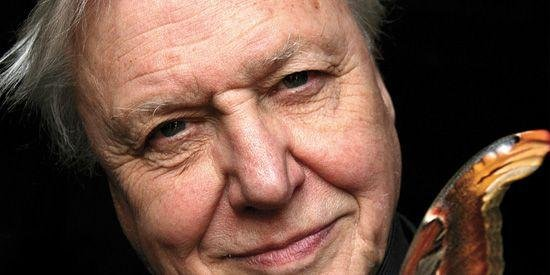 David Attenborough, What I've learned