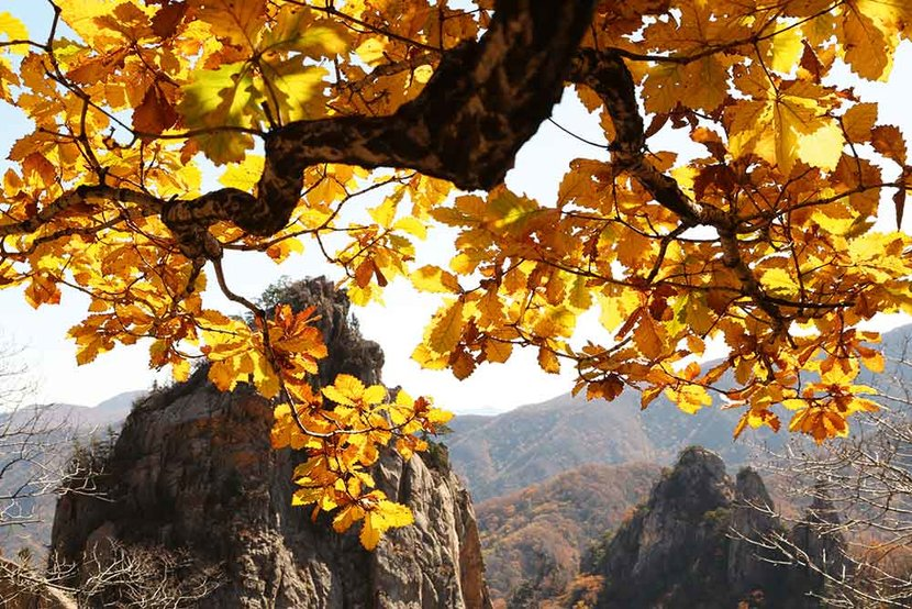 Travel, Korea, Autumn, Korea in the Autumn, Korea in the fall, Travel feature Korea, Travelling to korea, Jamie Lafferty