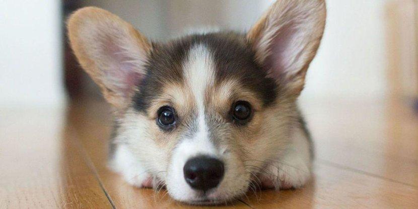 Animal, Sense, Six sense, Animal instinct, Esquire, You dog knows, Dog, Evergreen