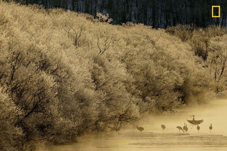"""MORNING CRANES - """"I was able to capture the silhouettes of the cranes through the morning fog."""""""
