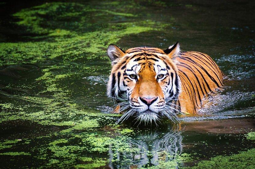 "Dubai Safari, AED 1 billion project, Expo 2020, Wild-life sanctuary, Dubai's first ever wild-life park is finally complete, Awaiting inauguration, The 1 billion dirhams project ""Dubai Safari"" is set to open this December"