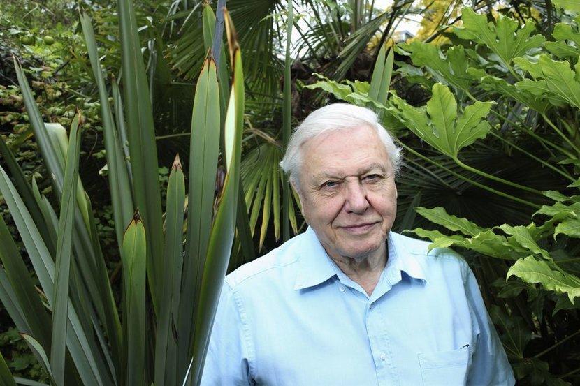 David Attenborough, BBC, BBC One, Dynasty