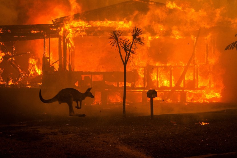 Almost Half A Billion Animals Have Been Killed By The Bush Fires In Australia Esquire Middle East