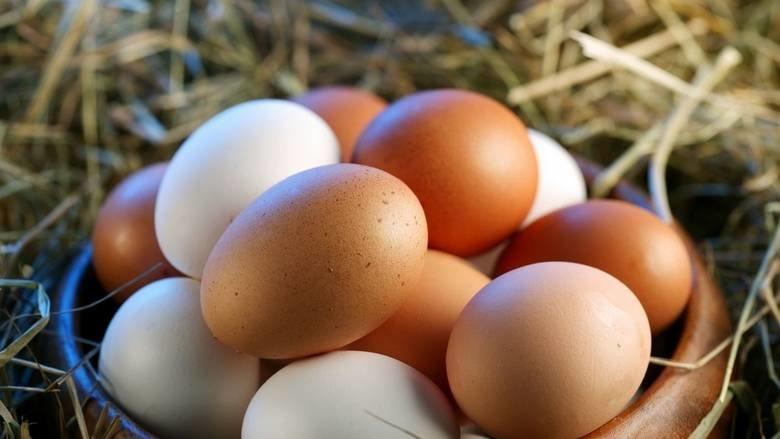 UAE, Eggs
