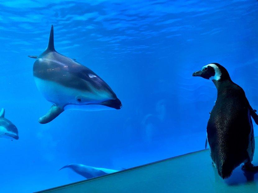 Penguin, Aquarium