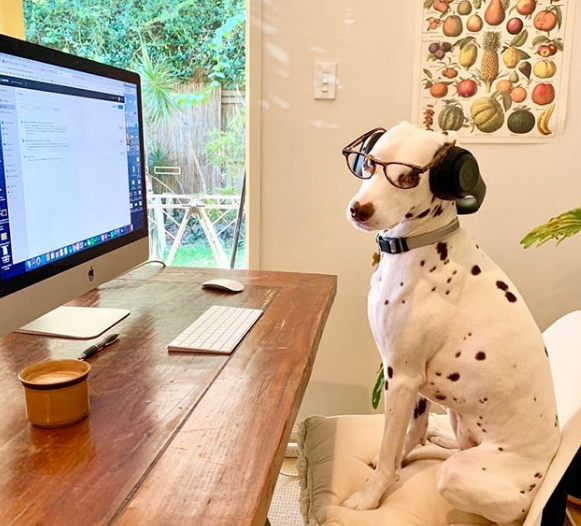 Dogs, Working from home, WFH, Covid 19, Coronavirus