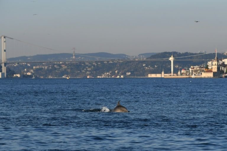 Dolphins, Istanbul, Bosphorus