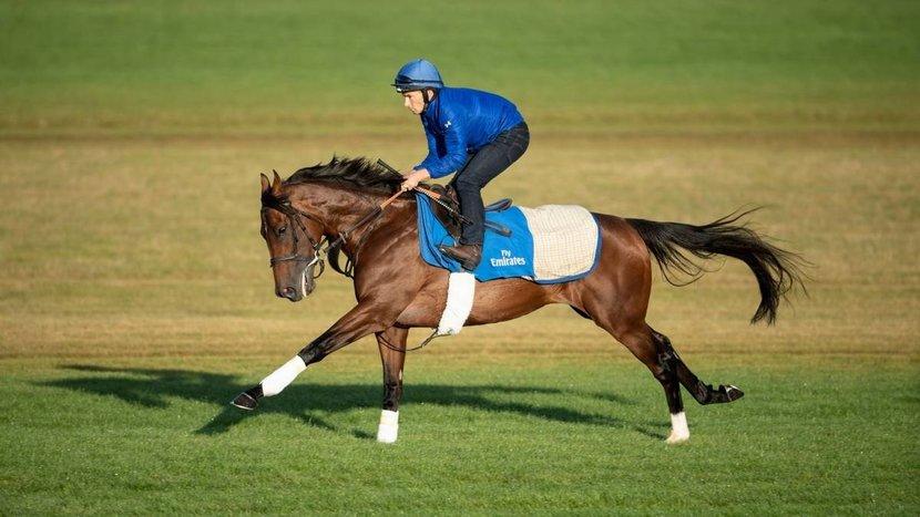 Sheikh Mohammad, Sheikh mohammed bin rashid, Horse racing, Horses