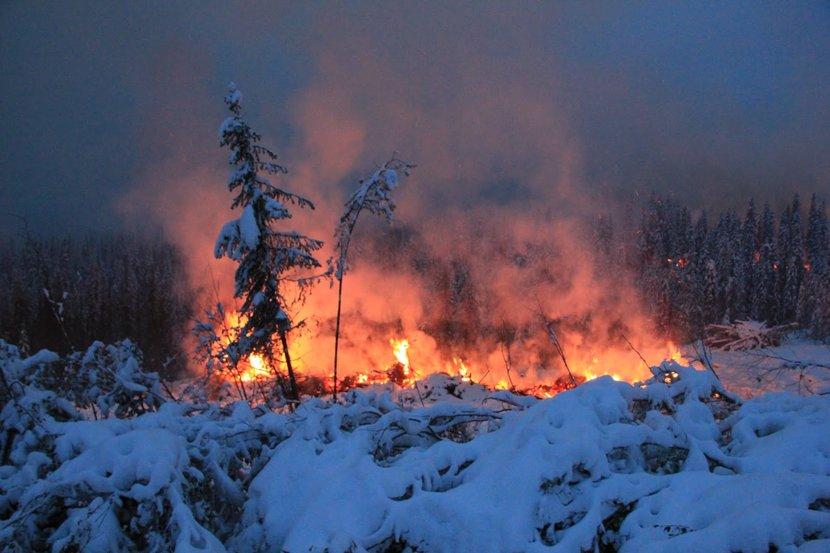 Zombie Wildfires, Zombie Fires, Zombies, Arctic fires, Forest fires, What are zombie wildfires